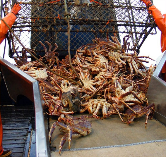 cua king crab alaska