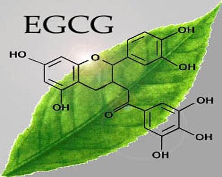 cộng dùng từ lá trà xanh