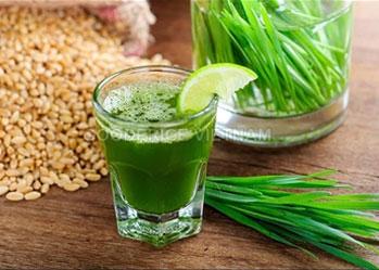 Bột cỏ lúa mì tốt cho sức khỏe