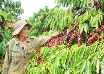 Cơ hội Xuất khẩu cà phê Việt sang thị trường châu Âu