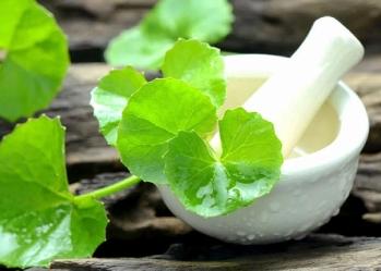 Công dụng của rau má đối với sức khỏe
