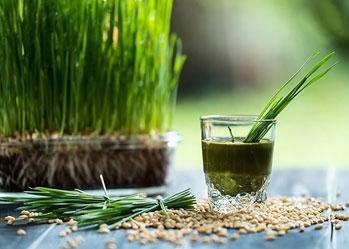 Lợi ích của bột cỏ lúa mì cho da, tóc và sức khỏe