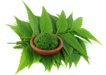 Lợi ích đáng kinh ngạc từ bột lá neem cho da, tóc và sức khoẻ