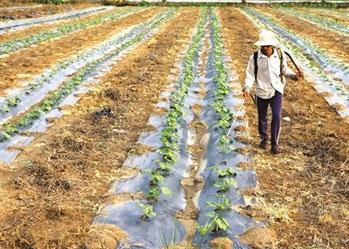 Phát triển Mô hình Nông nghiệp thông minh tại nhiều tỉnh thành