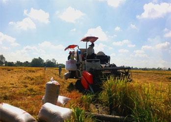 Xuất khẩu lúa gạo khởi sắc - Điểm sáng giữa thời COVID-19