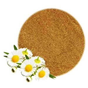 Bột hoa cúc chất lượng cao