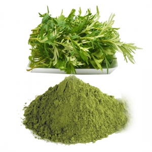 Vietnam artemisia vulgaris powder high quality
