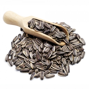 Sunflower seed high quality