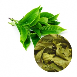 Dried green tea high quality from Vietnam