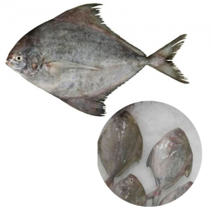 Iqf frozen black pomfret fish high quality
