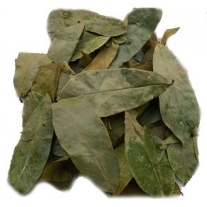Dried Annona Muricata Leaves