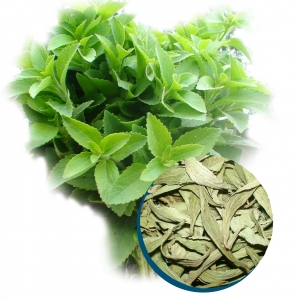 Dried stevia rebaudiana from vietnam