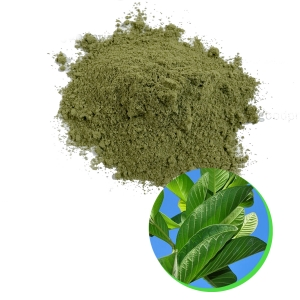 Vietnam guava leaf powder high quality