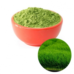 Wheatgrass powder high quality and best price