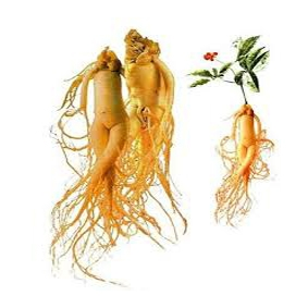 Fresh ginseng high quality from korea