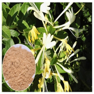 Honeysuckle flower powder