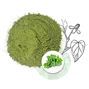 Fish mint leaf powder