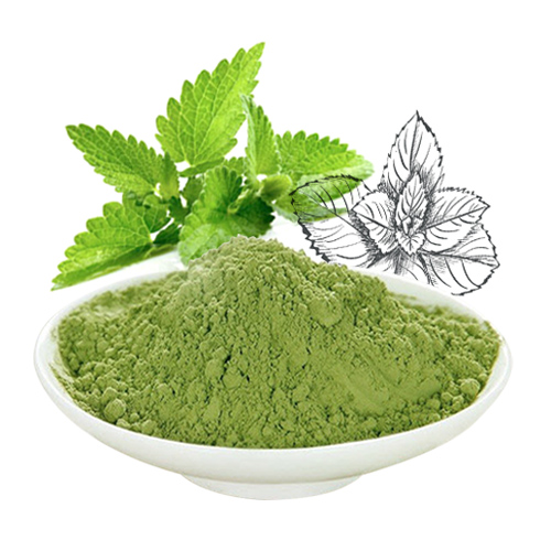 Mentha arvensis powder