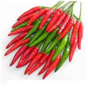 Vietnam fresh chili export