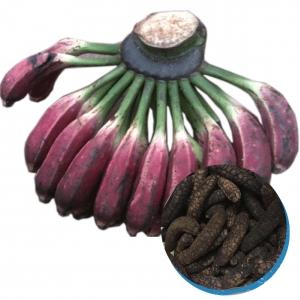 Dried musa balbisiana
