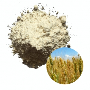 Wheat flour high quality from USA