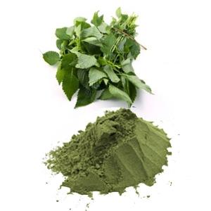 Bột lá kinh giới nguyên chất Elsholtzia ciliata leaf powder