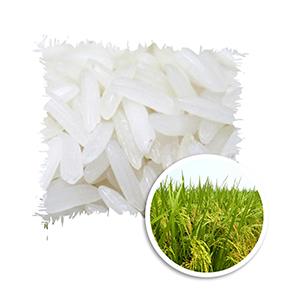 Gạo trắng hạt dài